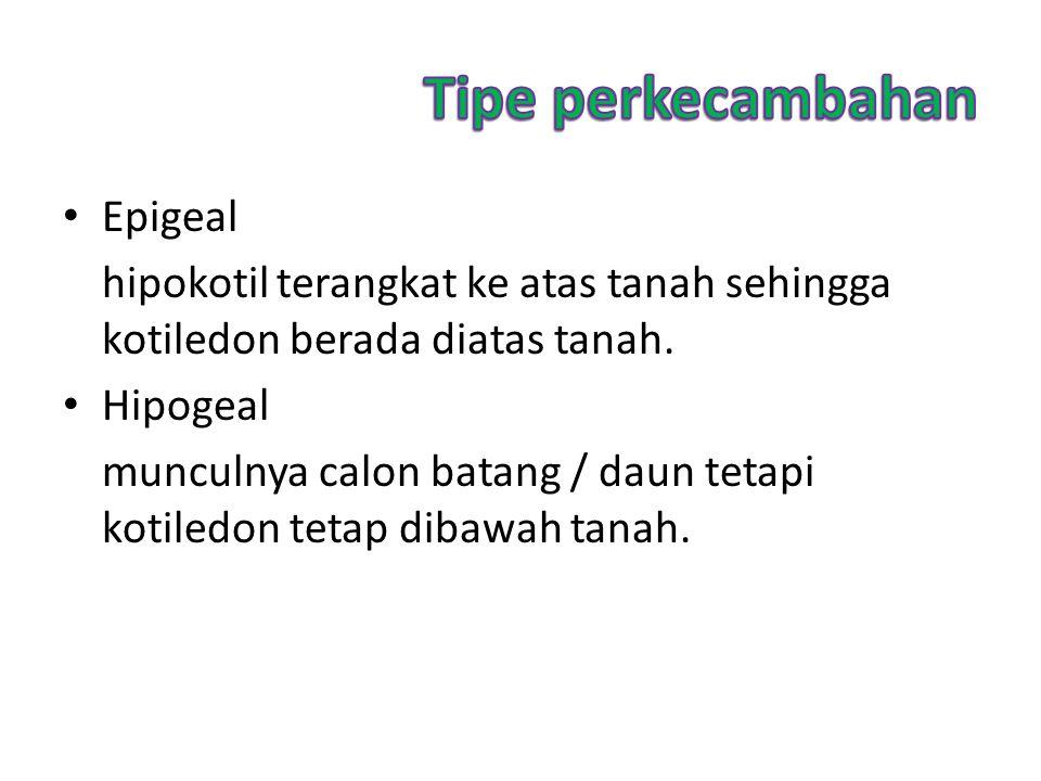 Tipe perkecambahan Epigeal