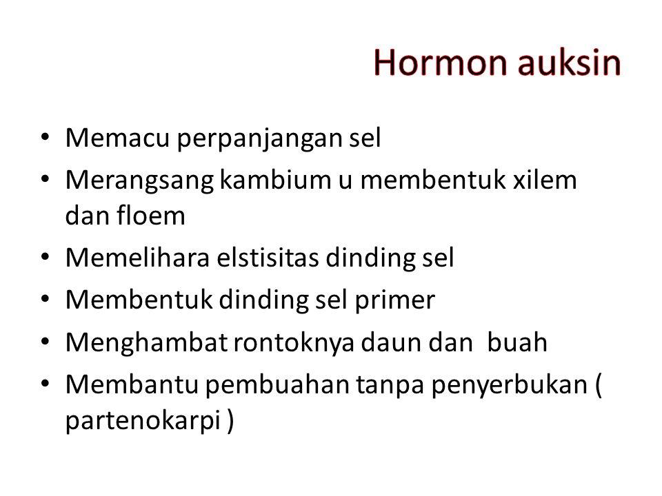Hormon auksin Memacu perpanjangan sel