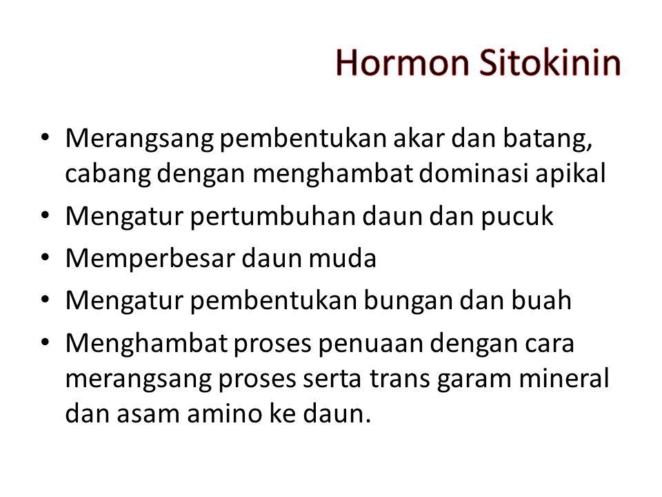 Hormon Sitokinin Merangsang pembentukan akar dan batang, cabang dengan menghambat dominasi apikal. Mengatur pertumbuhan daun dan pucuk.