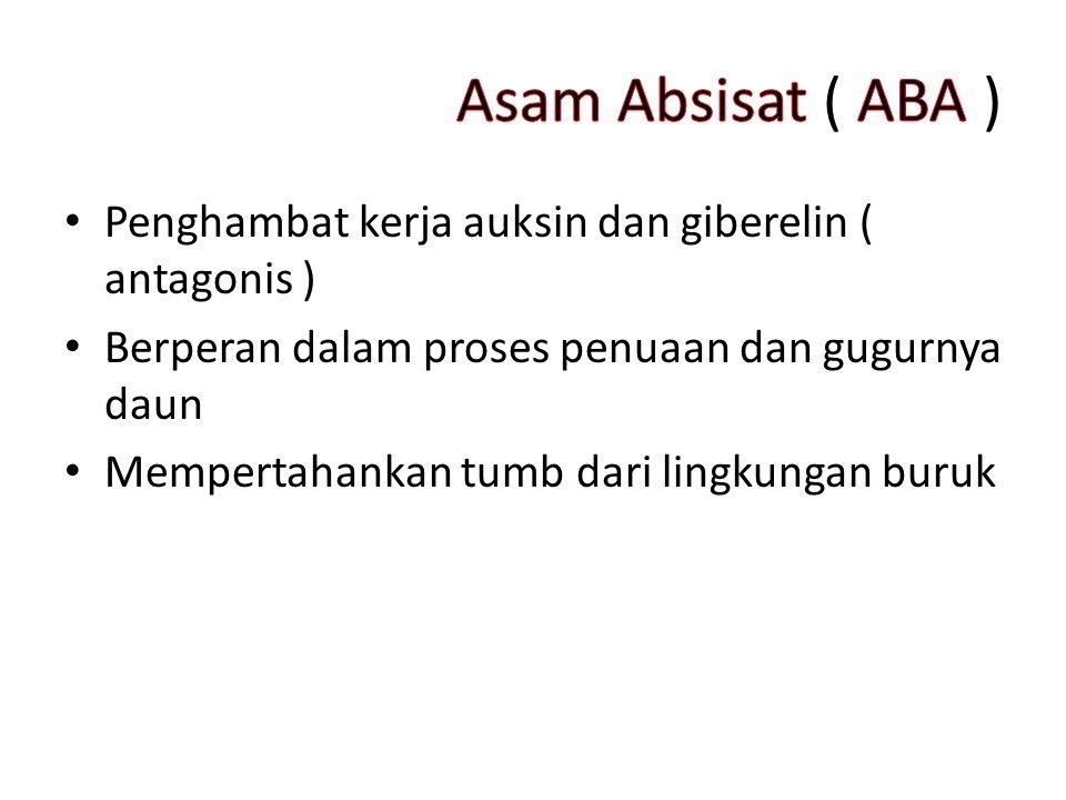 Asam Absisat ( ABA ) Penghambat kerja auksin dan giberelin ( antagonis ) Berperan dalam proses penuaan dan gugurnya daun.