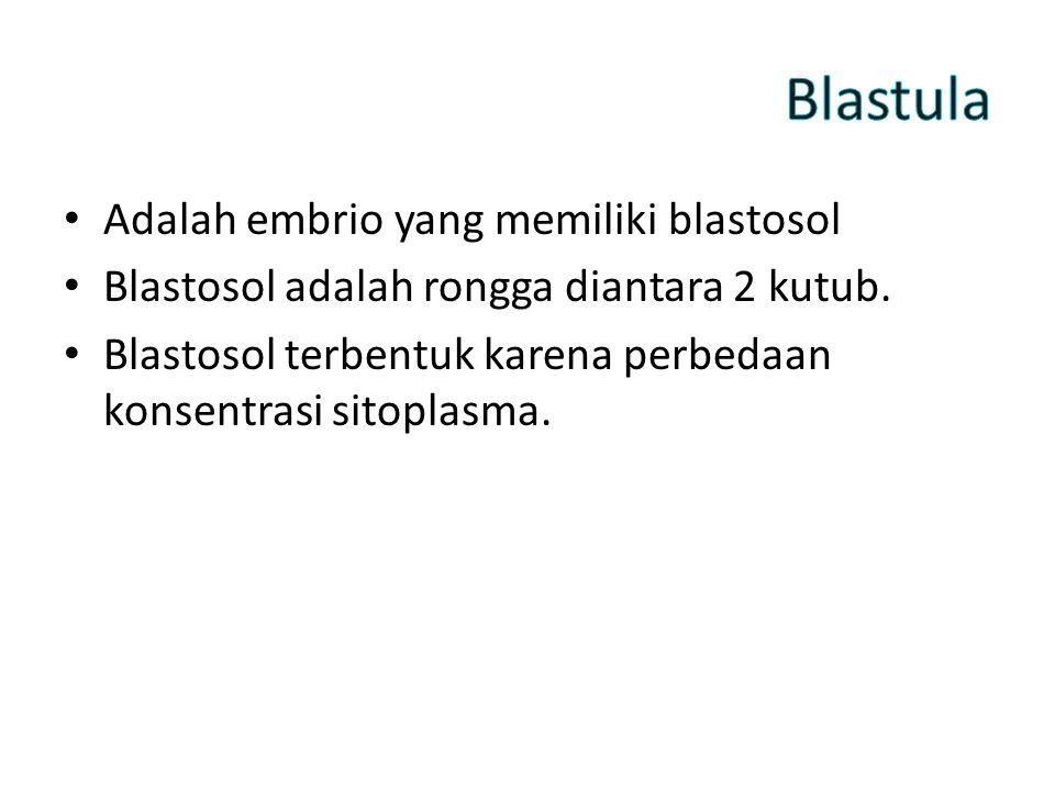 Blastula Adalah embrio yang memiliki blastosol