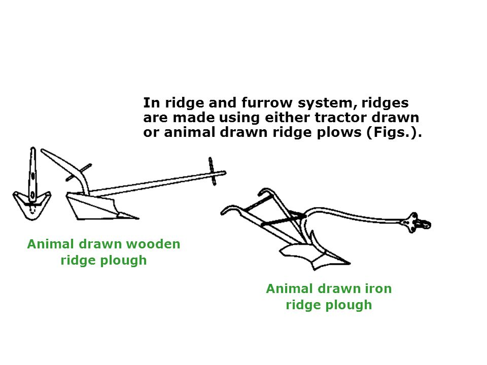 In ridge and furrow system, ridges are made using either tractor drawn or animal drawn ridge plows (Figs.).