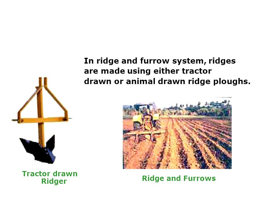 In ridge and furrow system, ridges are made using either tractor