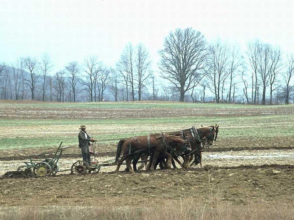 Traktor Bajak