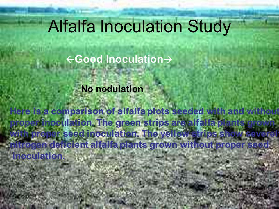 Alfalfa Inoculation Study