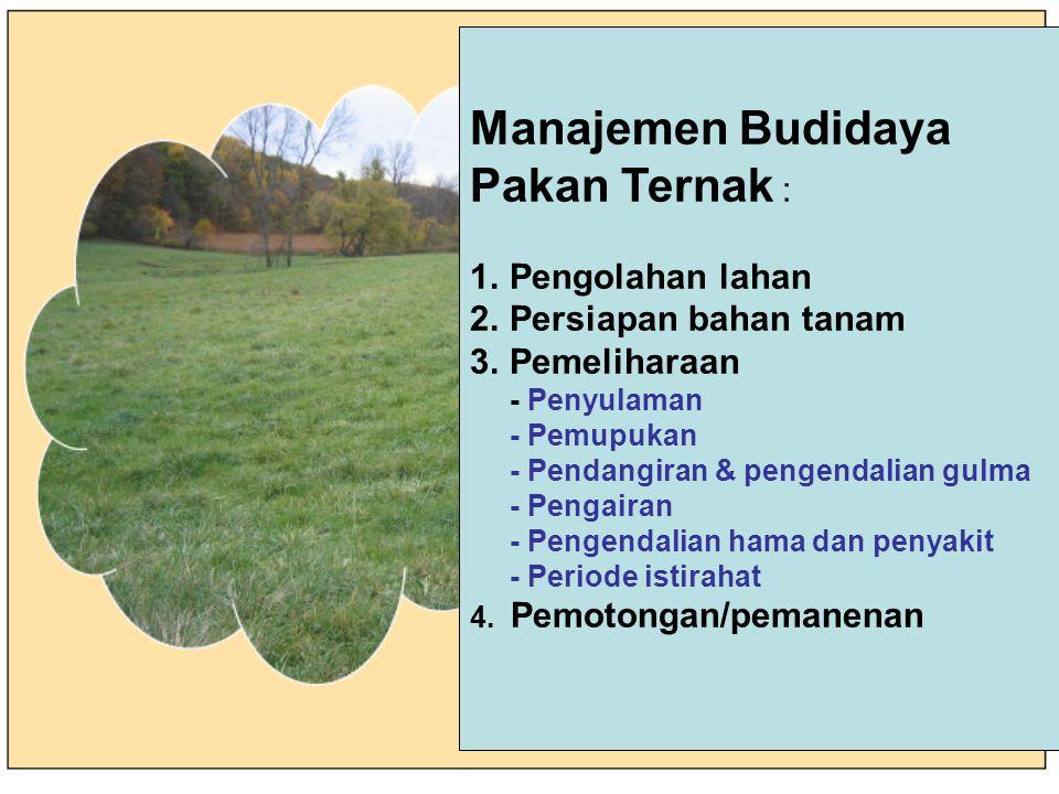 Manajemen Budidaya Pakan Ternak : Pengolahan lahan