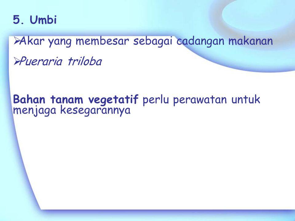 5. Umbi Akar yang membesar sebagai cadangan makanan.