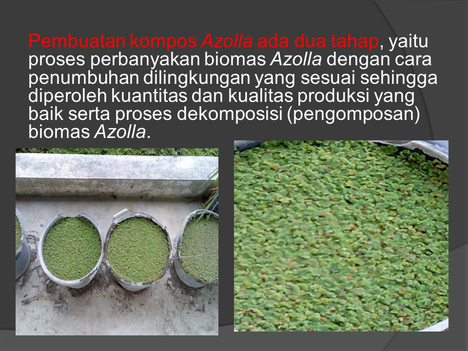 Pembuatan kompos Azolla ada dua tahap, yaitu proses perbanyakan biomas Azolla dengan cara penumbuhan dilingkungan yang sesuai sehingga diperoleh kuantitas dan kualitas produksi yang baik serta proses dekomposisi (pengomposan) biomas Azolla.