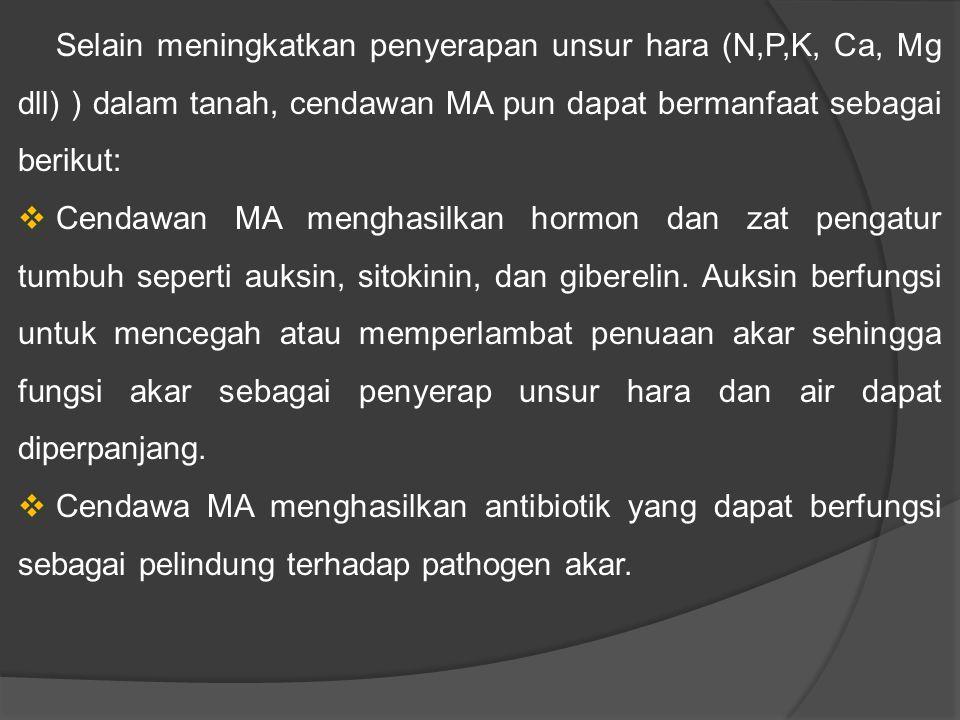Selain meningkatkan penyerapan unsur hara (N,P,K, Ca, Mg dll) ) dalam tanah, cendawan MA pun dapat bermanfaat sebagai berikut: