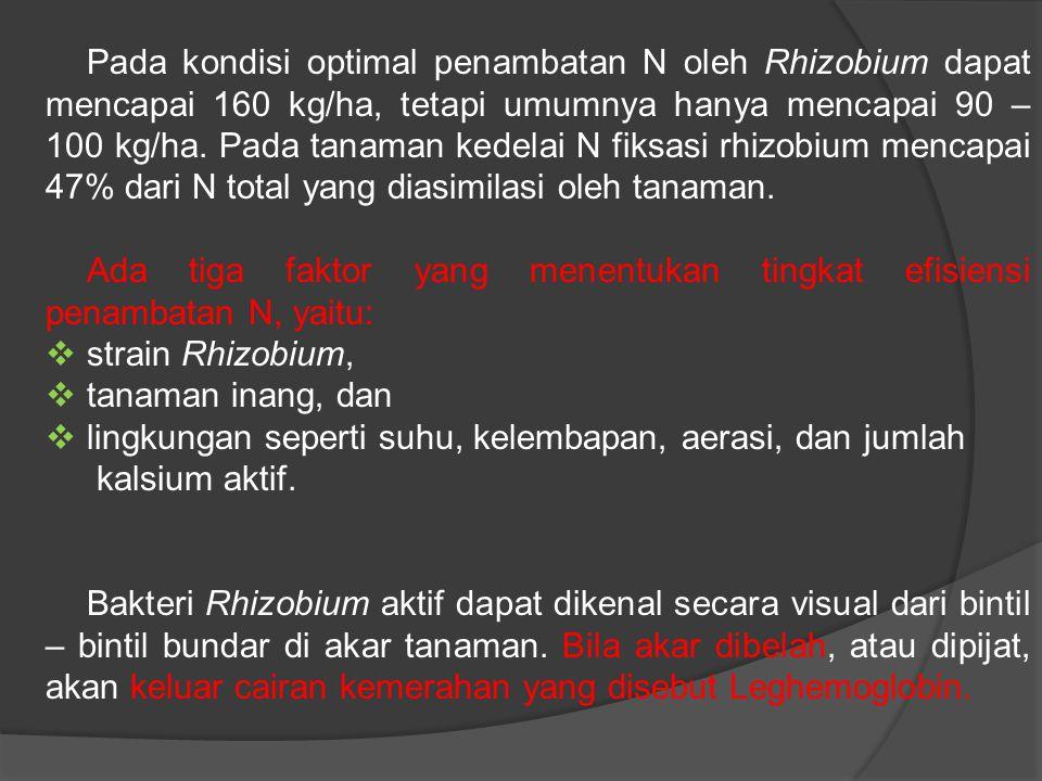 Pada kondisi optimal penambatan N oleh Rhizobium dapat mencapai 160 kg/ha, tetapi umumnya hanya mencapai 90 – 100 kg/ha. Pada tanaman kedelai N fiksasi rhizobium mencapai 47% dari N total yang diasimilasi oleh tanaman.