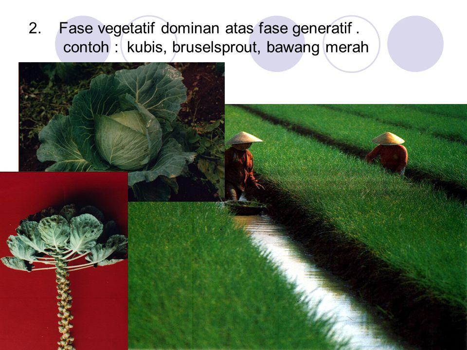 2. Fase vegetatif dominan atas fase generatif