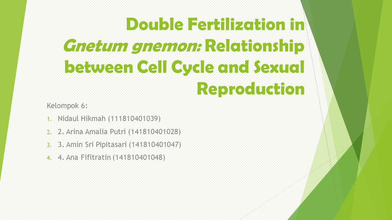 Double Fertilization in Gnetum gnemon: Relationship between Cell Cycle and Sexual Reproduction