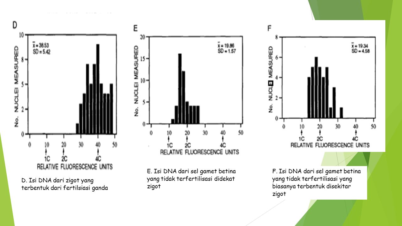 E. Isi DNA dari sel gamet betina yang tidak terfertilisasi didekat zigot