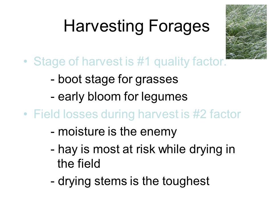 Harvesting Forages Stage of harvest is #1 quality factor.