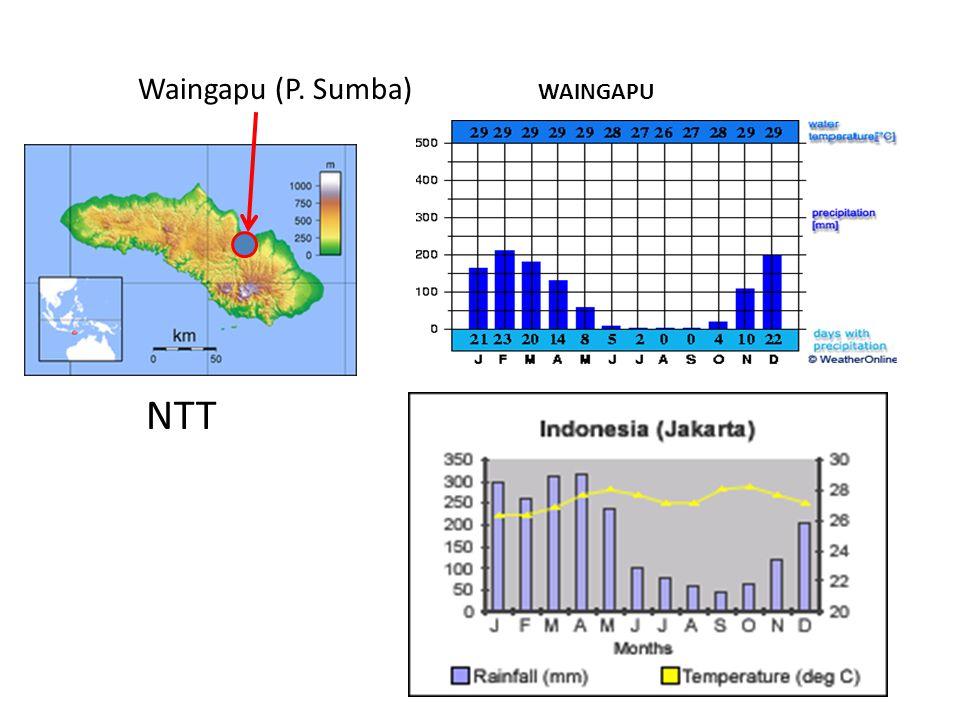 Waingapu (P. Sumba) WAINGAPU NTT