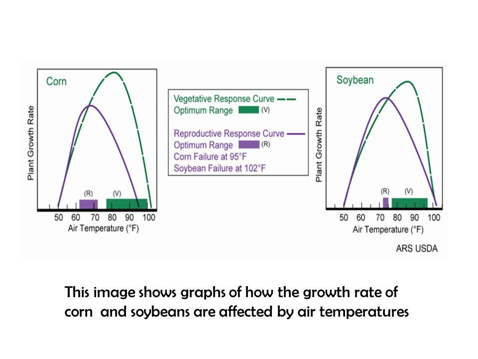This image shows graphs of how the growth rate of corn and soybeans are affected by air temperatures