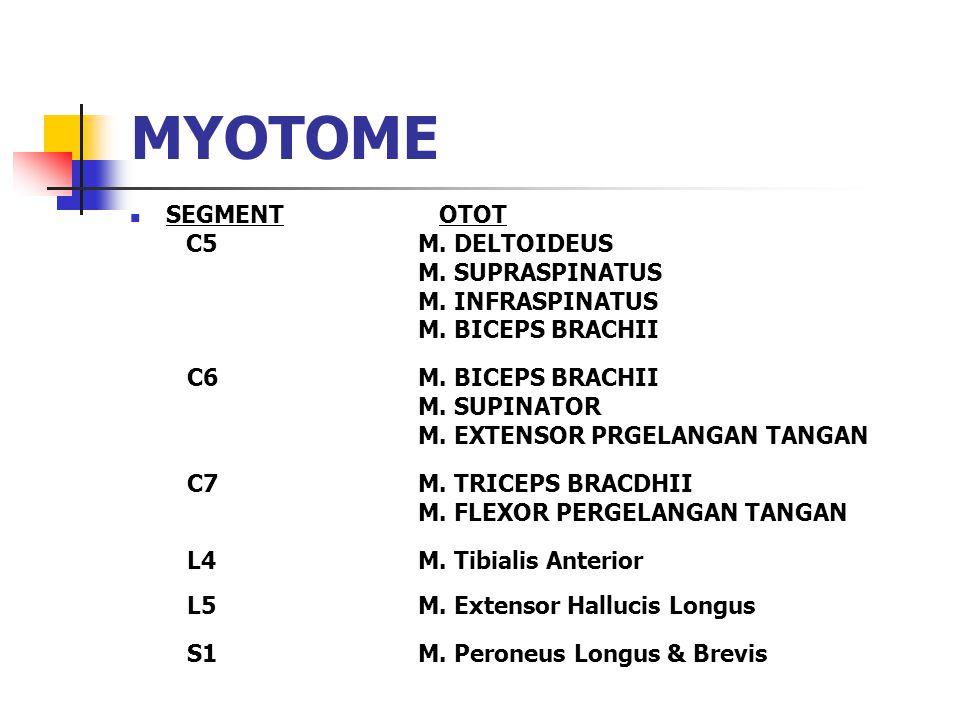 MYOTOME SEGMENT OTOT C5 M. DELTOIDEUS M. SUPRASPINATUS