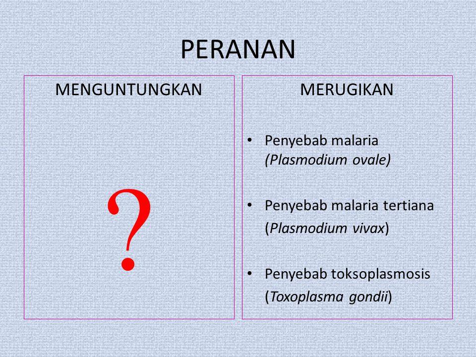 PERANAN MENGUNTUNGKAN MERUGIKAN Penyebab malaria (Plasmodium ovale)
