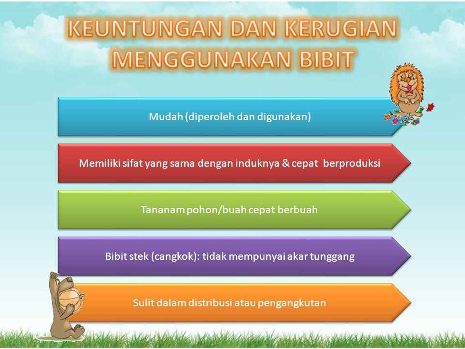 KEUNTUNGAN DAN KERUGIAN MENGGUNAKAN BIBIT