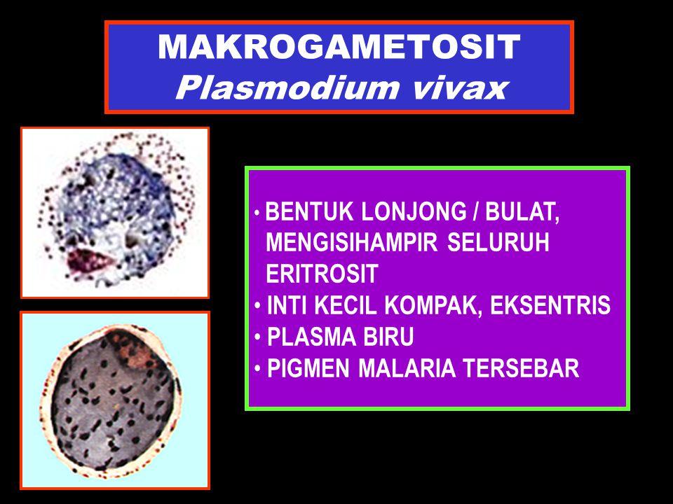 MAKROGAMETOSIT Plasmodium vivax