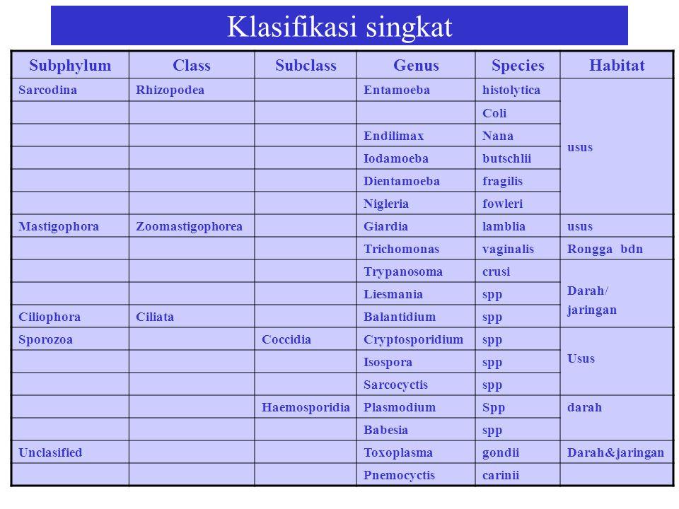Klasifikasi singkat Subphylum Class Subclass Genus Species Habitat