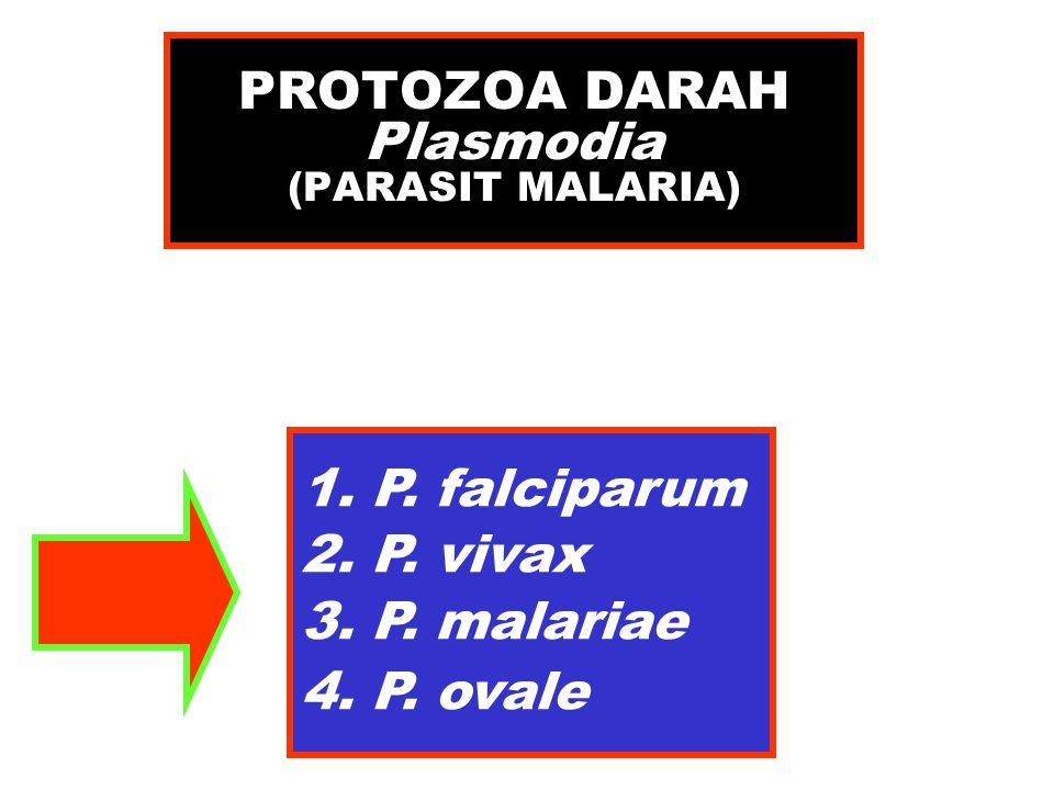 PROTOZOA DARAH Plasmodia (PARASIT MALARIA)