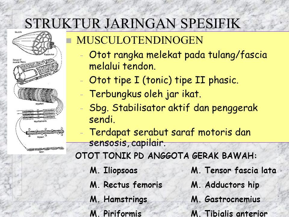 STRUKTUR JARINGAN SPESIFIK