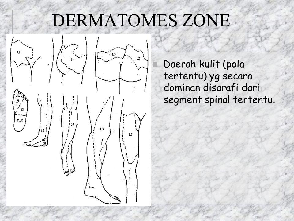 DERMATOMES ZONE Daerah kulit (pola tertentu) yg secara dominan disarafi dari segment spinal tertentu.