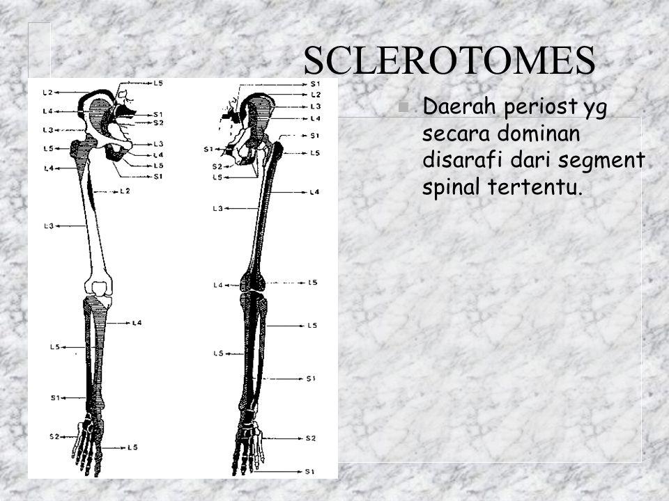 SCLEROTOMES Daerah periost yg secara dominan disarafi dari segment spinal tertentu.