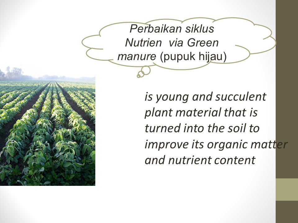 Perbaikan siklus Nutrien via Green manure (pupuk hijau)