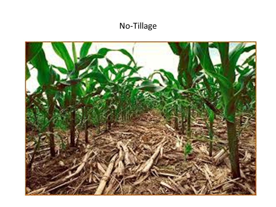 No-Tillage