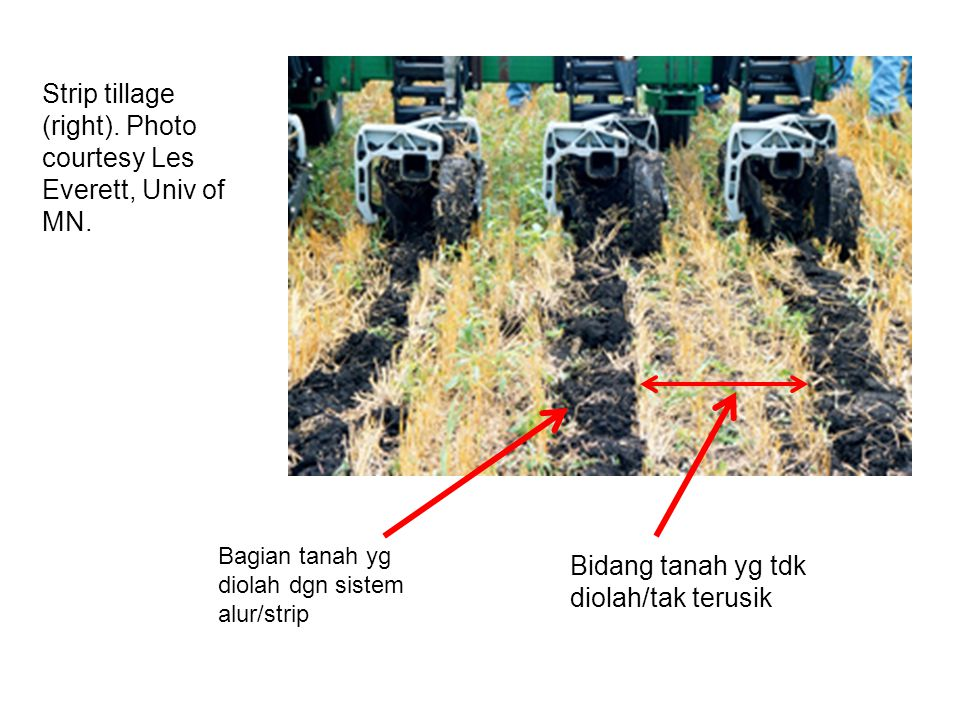 Strip tillage (right). Photo courtesy Les Everett, Univ of MN.