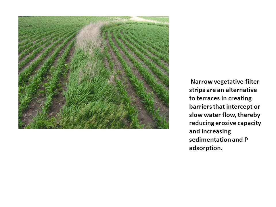 Narrow vegetative filter strips are an alternative to terraces in creating barriers that intercept or slow water flow, thereby reducing erosive capacity and increasing sedimentation and P adsorption.