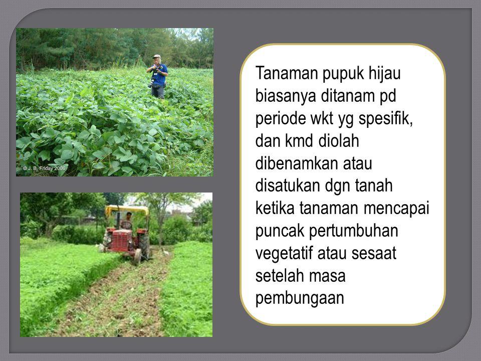 Tanaman pupuk hijau biasanya ditanam pd periode wkt yg spesifik, dan kmd diolah dibenamkan atau disatukan dgn tanah ketika tanaman mencapai puncak pertumbuhan vegetatif atau sesaat setelah masa pembungaan
