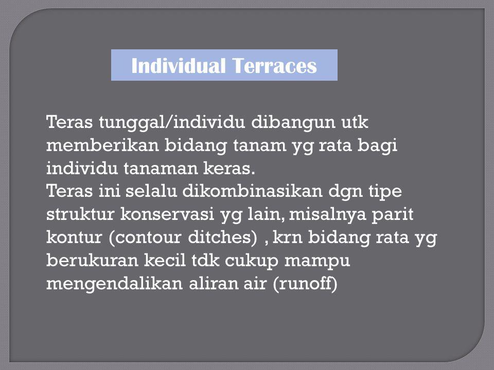 Individual Terraces Teras tunggal/individu dibangun utk memberikan bidang tanam yg rata bagi individu tanaman keras.
