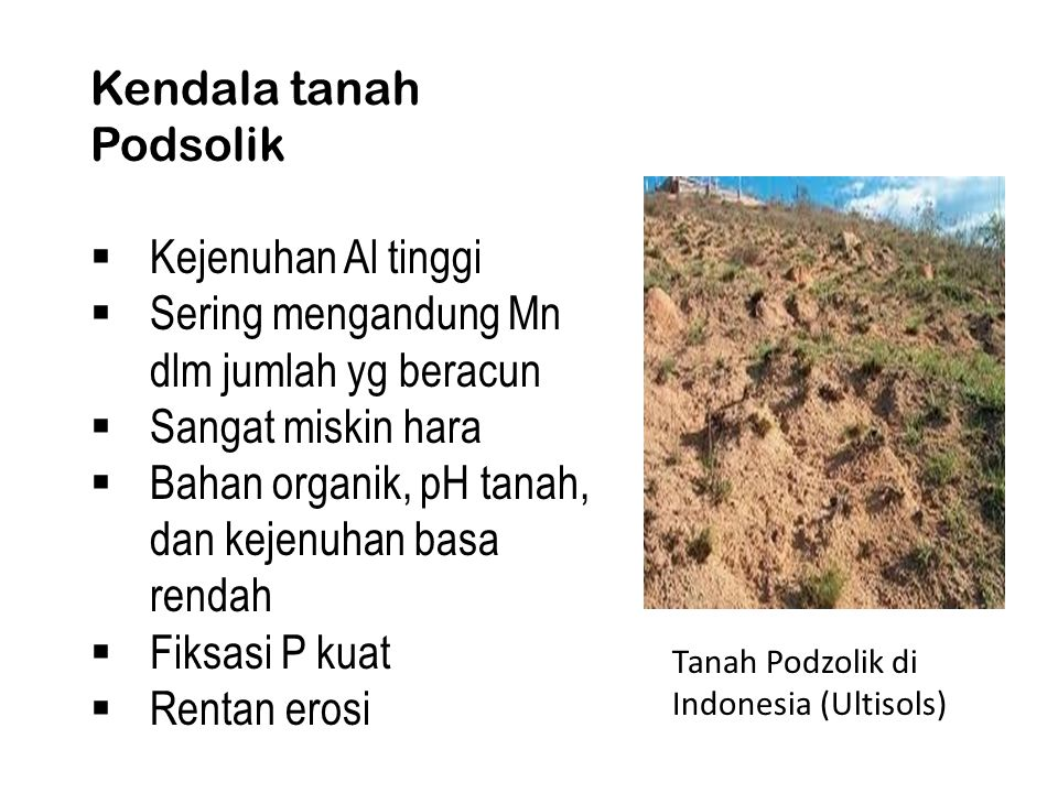 Kendala tanah Podsolik