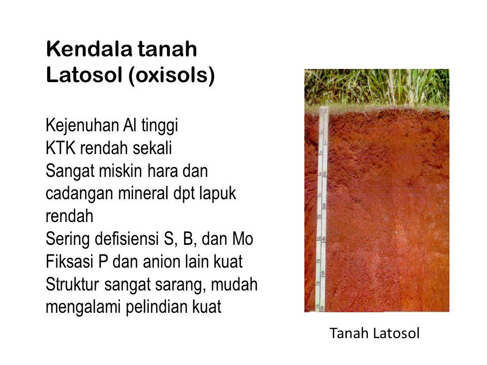 Kendala tanah Latosol (oxisols)