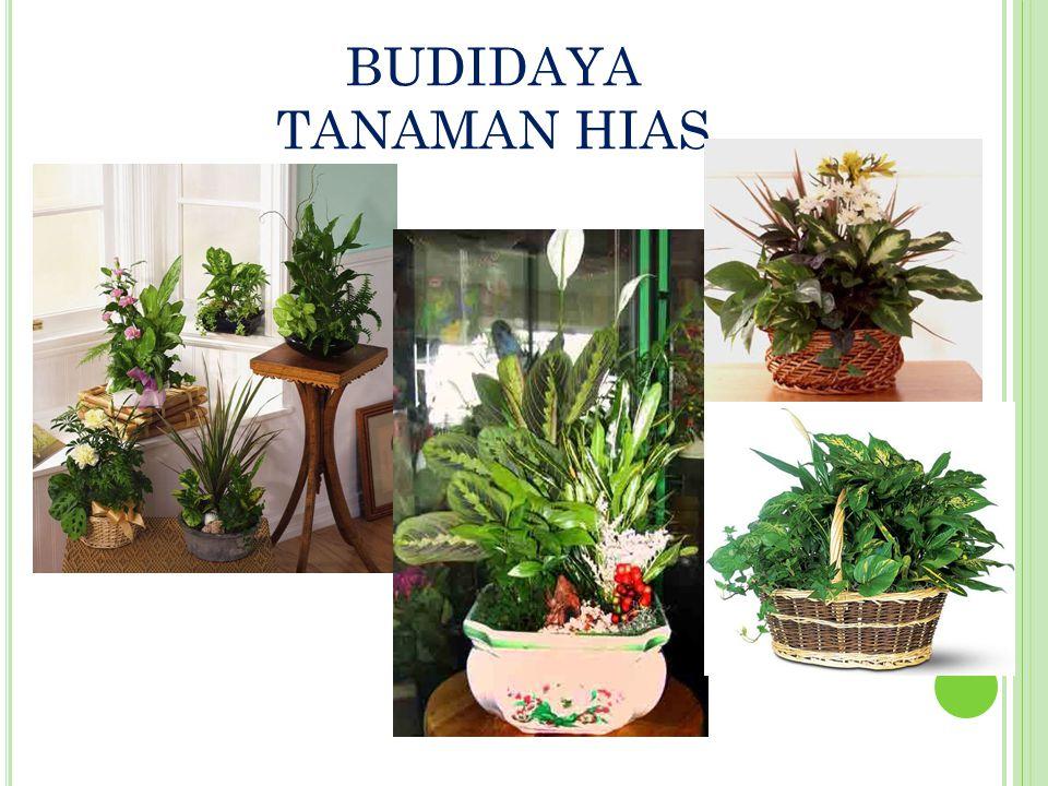 BUDIDAYA TANAMAN HIAS
