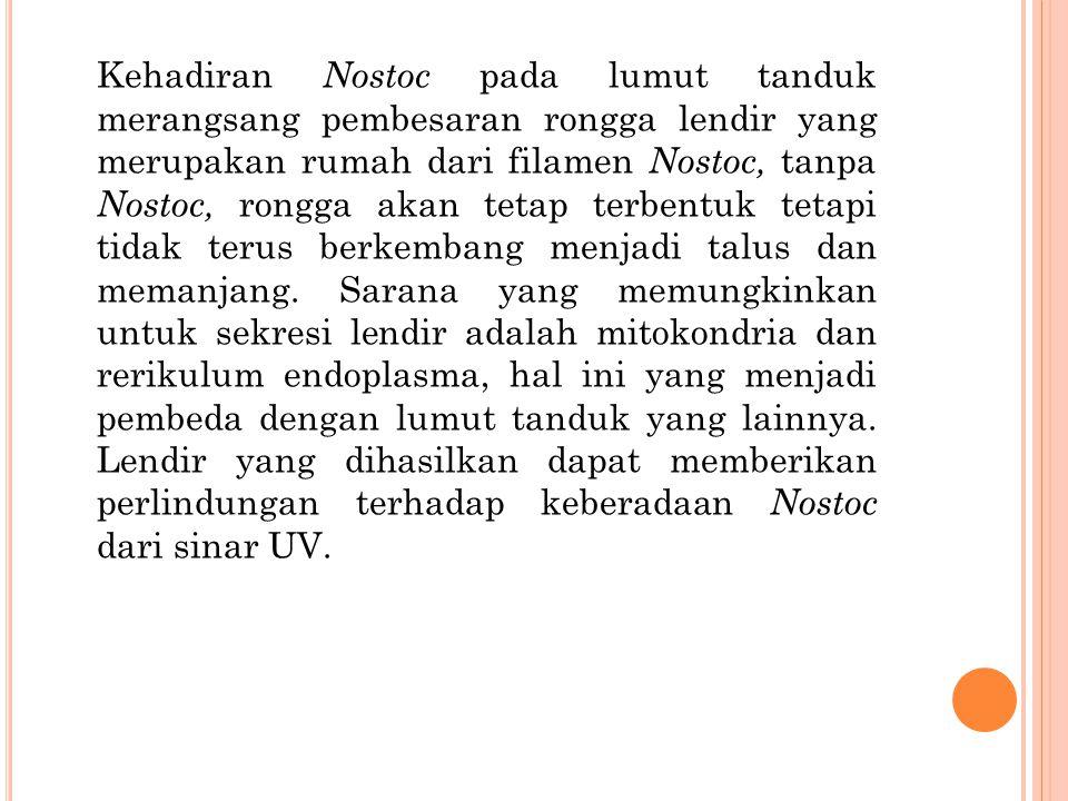 Kehadiran Nostoc pada lumut tanduk merangsang pembesaran rongga lendir yang merupakan rumah dari filamen Nostoc, tanpa Nostoc, rongga akan tetap terbentuk tetapi tidak terus berkembang menjadi talus dan memanjang.