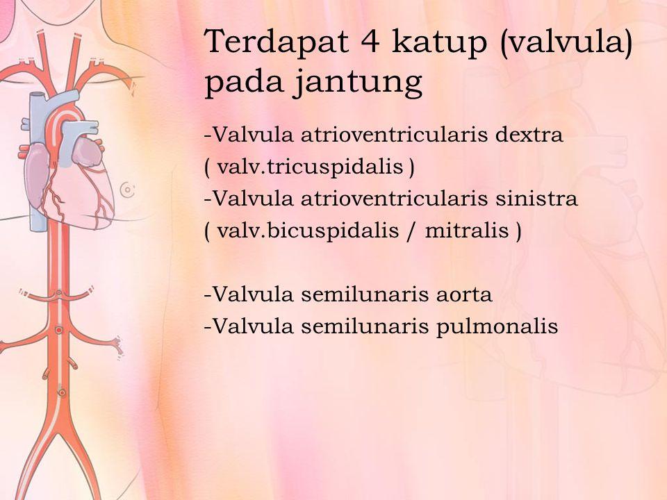 Terdapat 4 katup (valvula) pada jantung
