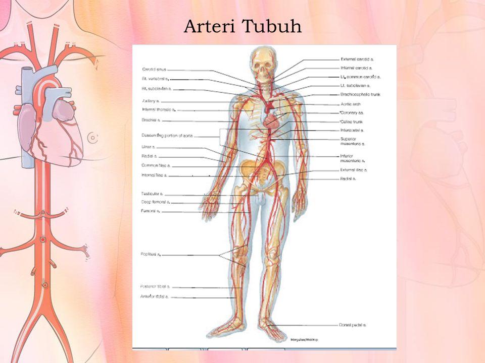 Arteri Tubuh