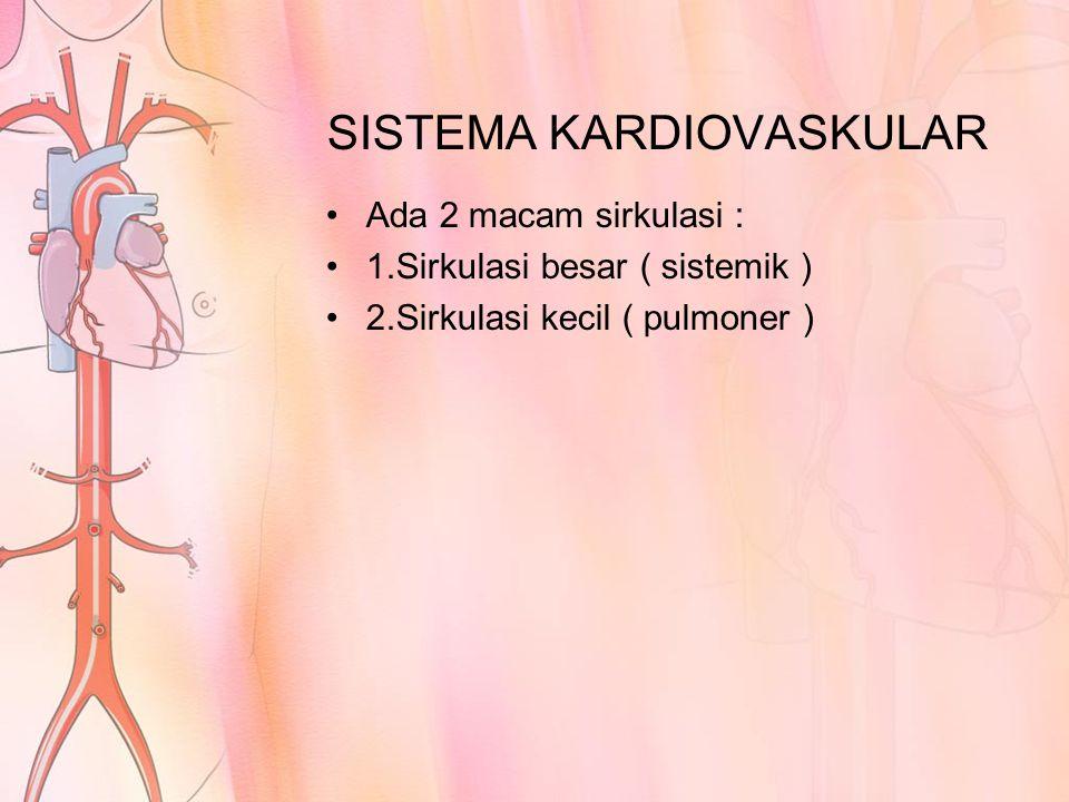 SISTEMA KARDIOVASKULAR
