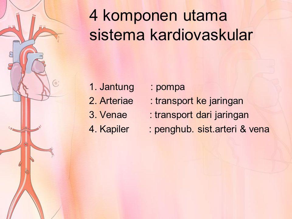 4 komponen utama sistema kardiovaskular