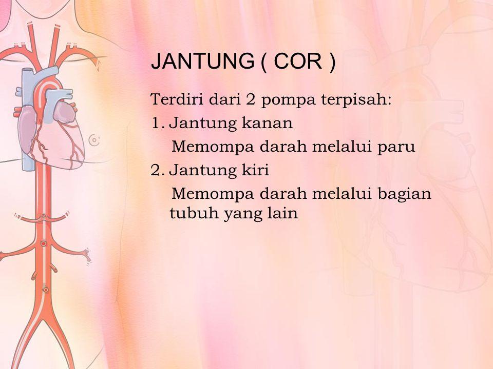 JANTUNG ( COR ) Terdiri dari 2 pompa terpisah: Jantung kanan