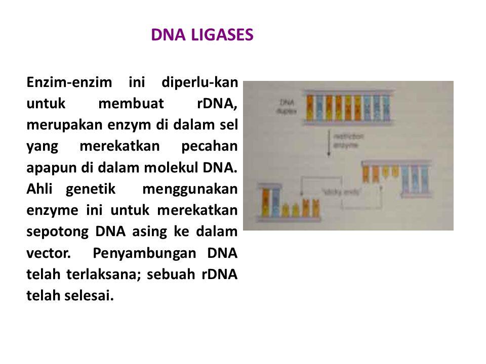 DNA LIGASES