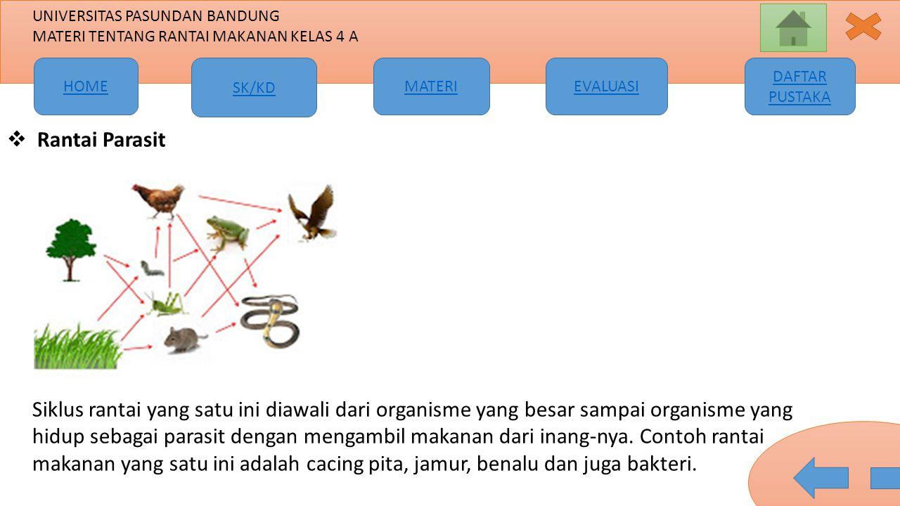 Rantai Parasit Siklus rantai yang satu ini diawali dari organisme yang besar sampai organisme yang hidup sebagai parasit dengan mengambil makanan dari inang-nya.