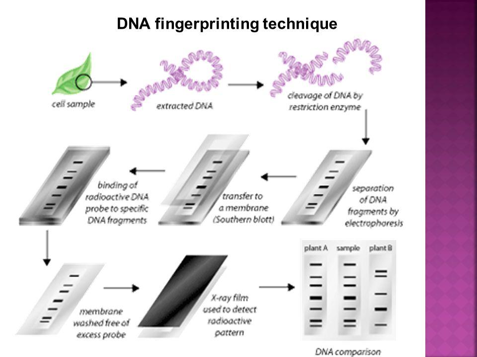 DNA fingerprinting technique