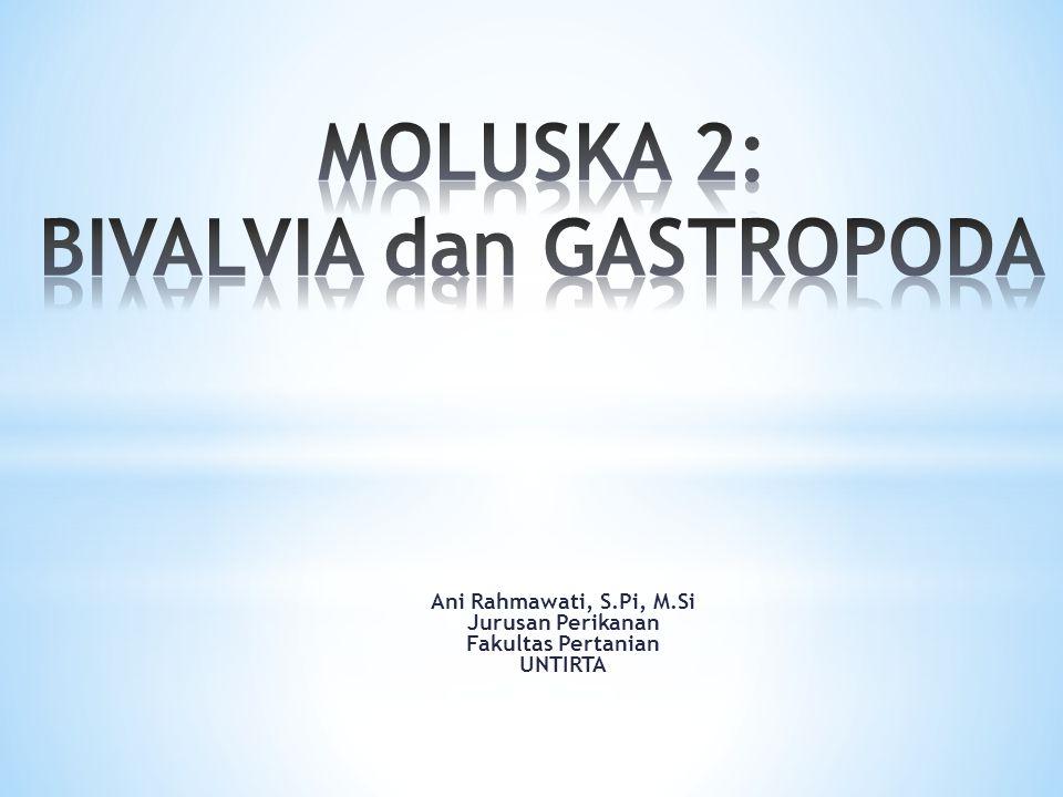 MOLUSKA 2: BIVALVIA dan GASTROPODA