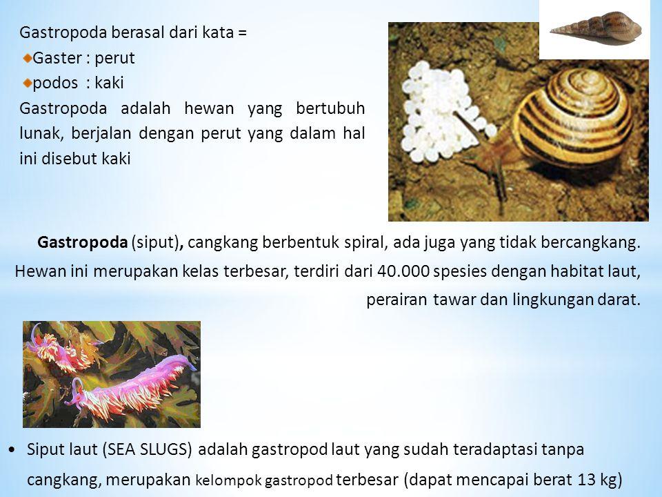 Gastropoda berasal dari kata =