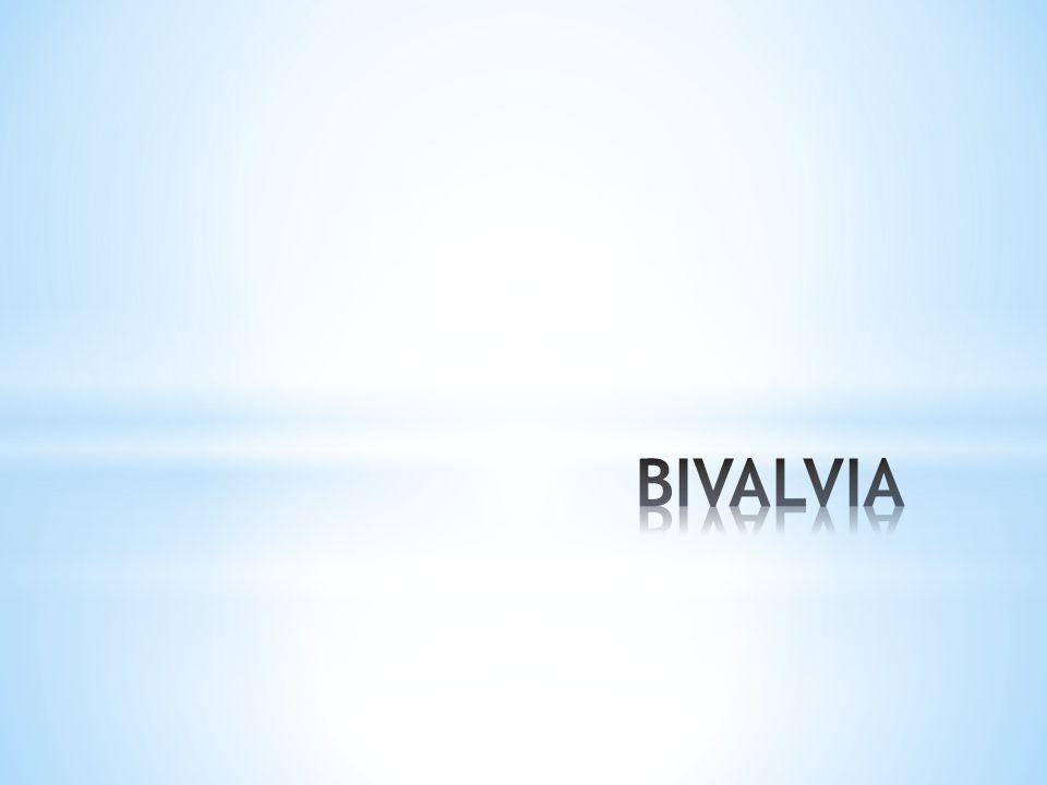 BIVALVIA